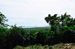 Sea View Land Plot 2,024.34 Sqm. for sale in Cape Yamu